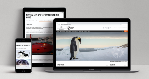 Australian Antarctic Program responsive website displayed on three devices: a laptop, a tablet and a mobile phone.